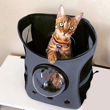 Fat Cat Cat Backpack - Katzenrucksack for Katzen - 6
