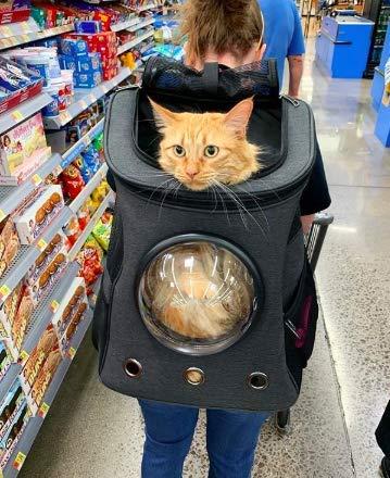 Fat Cat Katze Rucksack Carrier Rucksack–Cat für Katzen von - 2