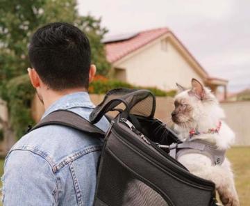 Fat Cat Katze Rucksack Carrier Rucksack–Cat für Katzen von - 4