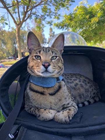 Fat Cat Katze Rucksack Carrier Rucksack–Cat für Katzen von - 9
